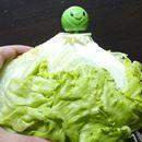 実験! 「野菜の鮮度を長持ちさせるグッズ」って本当に効果あるの?