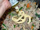 チューブ型の中華万能調味料で、肉野菜炒めを作ってみた!