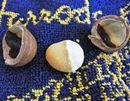 割り立ての味は極上。マカデミアナッツは殻付きがうまい!!