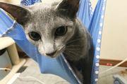 """「ハンモック」が我が家にやってきた! ただし""""猫""""限定の…"""