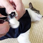 猫の爪切りお助けグッズで「世界一爪切りしやすい猫」は作れる!