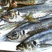 【8月はアジ!】初心者のための旬の魚の釣り方ガイド