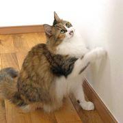 猫にひっかかれた壁紙は、クロス補修ツールでどこまで直せるのか!?