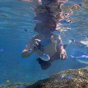 auのタフネススマホ「TORQUE G04」で海の中を撮影した!