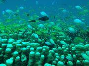 「iPhone用防水フォトハウジング」と石垣島の海に潜ってきた!