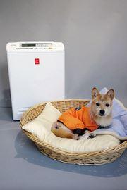 アイリスオーヤマ「ペット用空気清浄機」の実力を検証してみた!