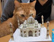 のり・はさみナシで世界の建築物が作れる3Dパズル