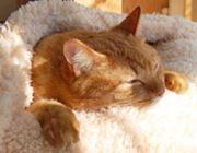 「猫をダメにするベッド」の猫ホイホイっぷりがすごいよ!