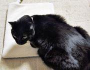 お猫様専用ホットカーペット(ときどき私用)