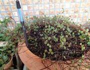 植物たちと会話ができちゃう!?「水分計 サスティー」