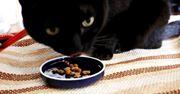 食いつきがハンパニャイ! 猫が夢中になるカリカリを発見