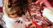 手元でペロペロ♪ ネコのかわいい姿が見られるフードが話題!