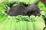 きゅっと絞れば猫スッポリ。キャベツ型ベッドにメロメロですにゃ