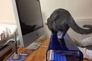 猫の襲撃からキーボードを守る! 専用カバーにちょっと罪悪感…