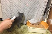 ねこじゃらしはもう古い?! 愛猫が飛びつくネズミ型LEDライト