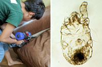 ダイソンのスティック掃除機「V8」で家を掃除したら、こんなにダニがいた!