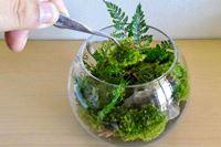 手のひらサイズの植物園。自分だけの「苔テラリウム」を作って癒やされよう