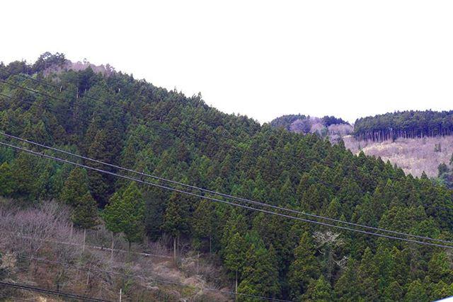 駅前にいきなり杉の山!