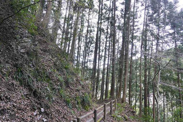 確かにちょっと林道に入るだけで、杉! 杉! 杉!