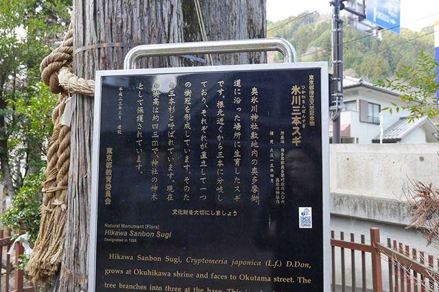 東京都指定天然記念物「氷川三本スギ」という杉のラスボスみたいなのも生えているし……