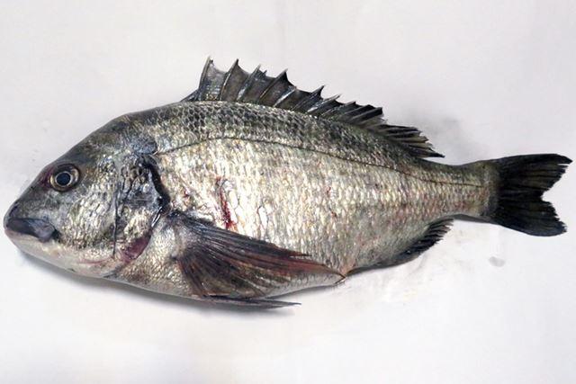 春先から梅雨にかけて、産卵を控えた大物が釣れやすい
