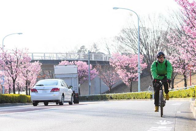 「バーミヤン坂」として有名な尾根幹の登り。桜を楽しむこともでき、まだまだ筆者には余裕がある
