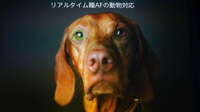 動物の瞳AFも利用できる