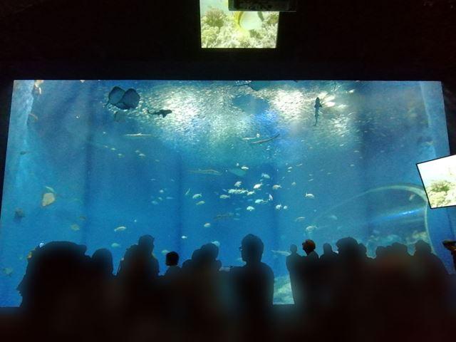 上と同じ構図を広角カメラで撮影。水槽全体が構図に収まった