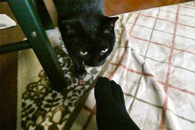 黒猫の胡麻(ゴマ)も判定役になってもらいました