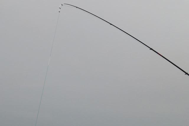 「さぐり」は長さ3mの1タイプをラインアップ。磯や根の多い釣り場でも活躍するだろう