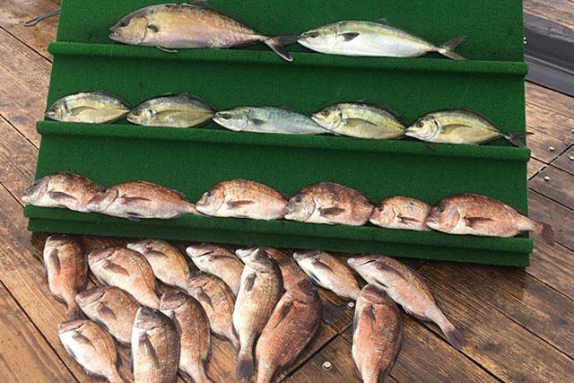 冒頭で紹介した、筆者の3つ隣でバンバン釣り上げていた常連さんの釣果がこれ。うらやましい限り