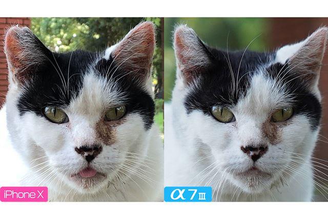 猫様のお顔を拡大してみます