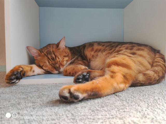 日中の屋内で猫を撮影。画素が約4,800万高いため、ピントの合った顔周辺の毛の質感はかなり良好