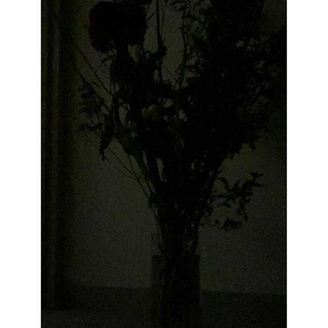 撮影時間を最短にした場合の写真。見た目に近い真っ暗な写真が撮影できた