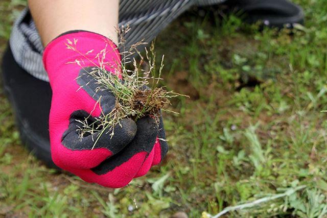 抜群のグリップ力で、雑草も根本からごっそり