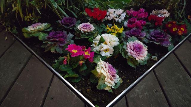 夜の花壇を撮影。かなり暗いシーンだが手ぶれも見られず鮮明で、花の発色も良好だ
