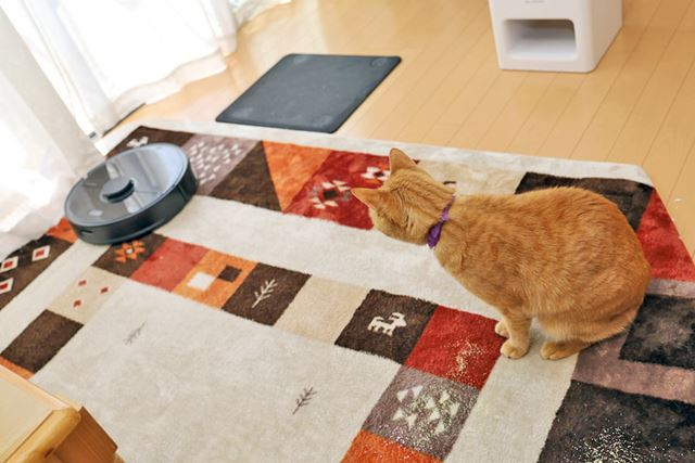 動くロボット掃除機を眺める我が家の猫