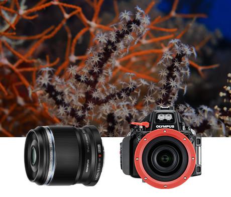 水中撮影システムに対応