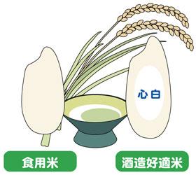 お米で選ぶ