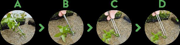 水草の植え方