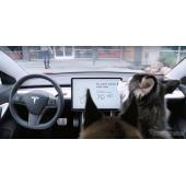テスラ モデル3に「愛犬モード」採用