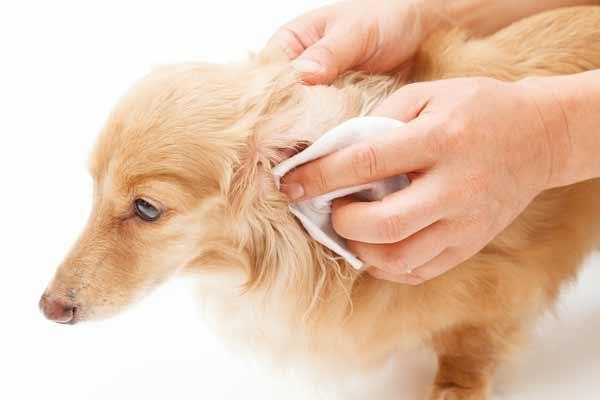 動物 アレルギー 治る